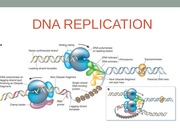 Topic 10- DNA Replication_Spring 2014
