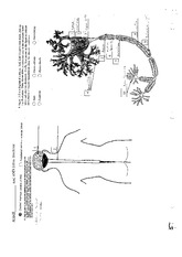 Cetntral and Peripheral Nervous System Worksheet