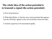 Lecture 3- the action potential
