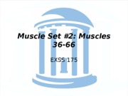 Muscles36-66-1