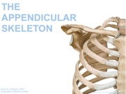 04+appendicular+skeleton.pdf