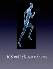The Skeletal and Muscular Systems Keynote