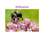 Lecture 3 - Pollination