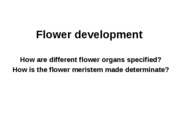 Lecture 13 - Flower development