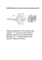 KINESIOLOG 2032A Class Notes Pathway originates to retina