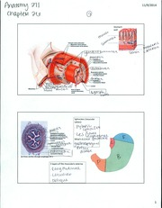 BIO 271 - Human Anatomy - Ch. 26 Notes