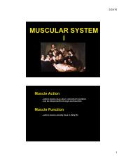 ANP 300 - Lecture 8 - Muscular System 1 (color)(1)