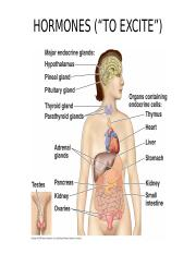 24_HORMONES_HUMANS_2_OUTLINE (1).ppt