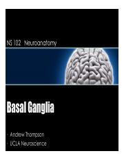 Lecture 13- week 7 Thursday Basal Ganglia