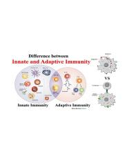 innate and adaptive immunity.jpg