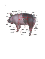 parts_of_the_pig