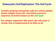 lect 4 Cell Replication
