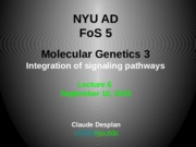 FoS 5 Lecture CD6 Mol Genetics 3 BMP _ Integration of Signaling.pptx