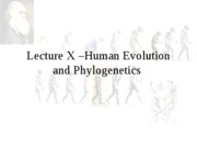 Lecture X Phylogenetics human evolution