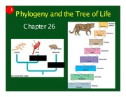 Ch 26 - Phylogeny and the tree of life (1 slide per page)
