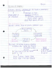 Chapter 2 Notes- Basic Financial Statements
