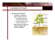ghex.colostate.edu_presentations_How_Plants_Grow.7
