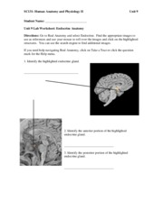 SC131 Unit 9 Assignment Lab Worksheet –EndocrineANSWERS