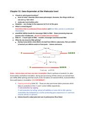 Review 1- Chapter 12. Gene Expression at the Molecular level (1).docx