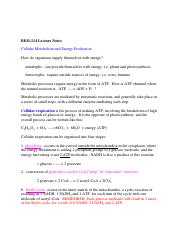 Cellular_Respiration_Notes
