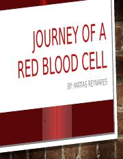 7.02 Journey of a red blood cell