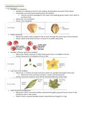Biology—Transport in Plants.pdf
