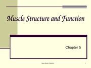 Ch 5 - Muscle Structure and Function