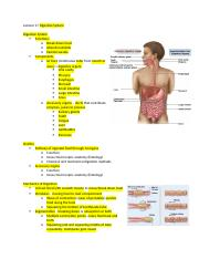 Lecture 17 Digestive System.docx