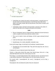 Ch 3 Carbon Atoms and Molecules Rutgers bio 101 pg 5
