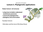 Lecture on Phylogenetic Applications