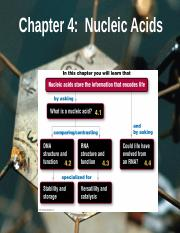 Chapter 4 Nucleic Acids