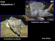Topic 20. Fish Adaptations powerpoint