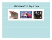 Lecture 8 Animal Cognition revised
