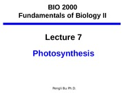 Lecture_7_Photosynthesis-4
