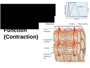 BIO 3303 Lecture 16 Muscle Function 2015 Notes