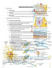 The Nervous System.docx