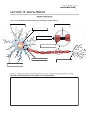 psych575_r3_neuron_worksheet (1)