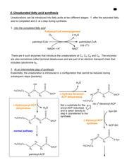 Unsaturated fatty acid synthesis