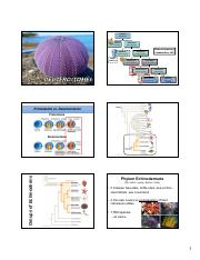 10d- Deuterstomes Echinoderms.pdf