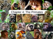 ANTH 101 The Primates Lecture Notes (Ch. 4)