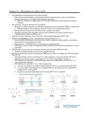 Chapter 24 – 'Biosynthesis of  Amino Acid'.pdf