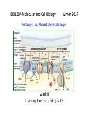 BIOL20A-W17-Discussion+Section-Week+8-Learning+Exercise-Key.pdf