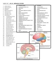 WORD LIST CH10 Nervous System.docx