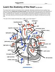 Sierra Flores - Learn the Anatomy of the Heart (by Number).pdf