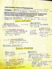 Anatomy and Phyc Notes  3