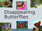 L14 Disappearing Butterflies