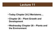 BSC2011_Plants_Lecture11