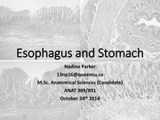Lecture 19 Esophagus and Stomach