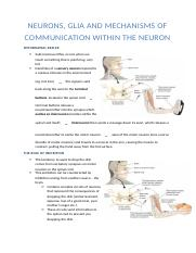 neurons, glia and mechanisms of communication within the neuron.docx