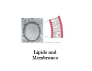 lipids_and_membranes_annotated